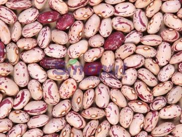 Light Speckled Kidney Bean American Round Shape