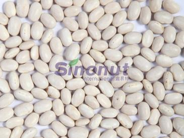 White Kidney Bean Japanese Type